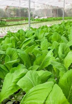 Nghịch lý nông sản sạch nhưng thiếu vắng đầu ra