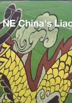 Chiêm ngưỡng cánh đồng rồng tại Trung Quốc