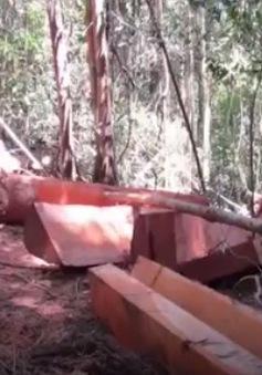 Đình chỉ 4 cán bộ kiểm lâm hủy hoại rừng tại Đăk Nông