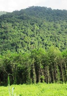 Khó khăn trong quản lý, bảo vệ rừng tại TT-Huế