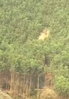 Quảng Bình: Kỷ luật hàng loạt cán bộ để mất rừng