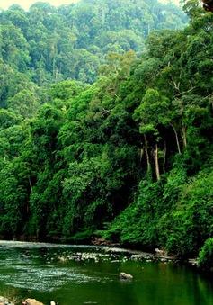 Cả nước còn hơn 10 triệu ha rừng tự nhiên