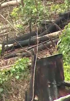 Đắk Nông yêu cầu nâng mức kỷ luật đối với cán bộ kiểm lâm làm mất rừng