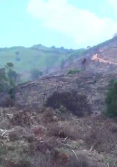 Vụ phá rừng quy mô lớn tại Bình Định: Diện tích rừng bị tàn phá lên tới 60,9 ha