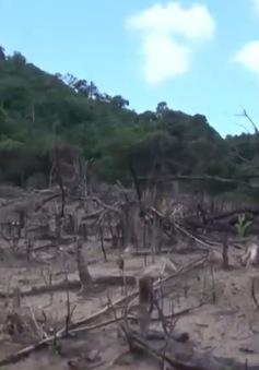 Bình Định sẽ khởi tố vụ phá gần 44 ha rừng