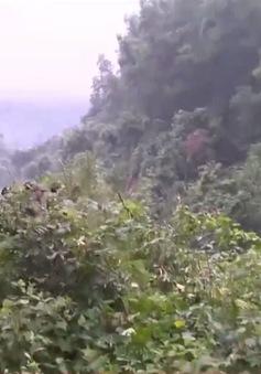 """Thừa Thiên Huế phát triển mô hình """"rừng cộng đồng"""""""