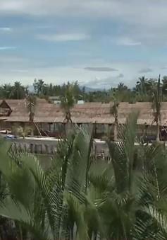 Quảng Nam triển khai dự án trồng và phục hồi rừng dừa nước