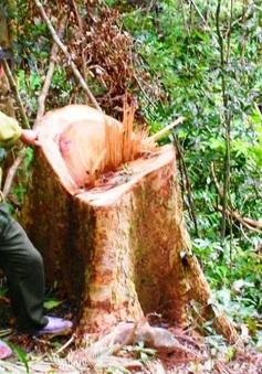 Khó khăn trong quản lý, bảo vệ rừng
