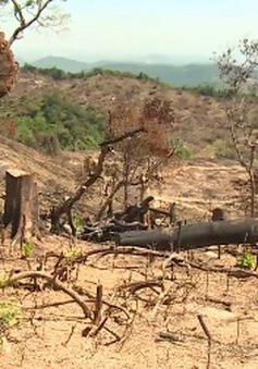 Bắt hai đối tượng liên quan đến vụ phá rừng An Lão, Bình Định