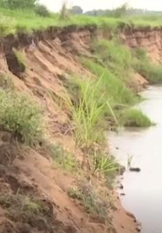 Sạt lở bủa vây Đồng bằng sông Cửu Long