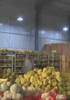 Phát hiện hàng chục tấn sầu riêng ngâm hóa chất