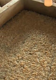 Hàng trăm tấn sứa tồn kho ở Hà Tĩnh vẫn chưa được tiêu hủy