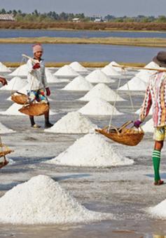 Giá muối tăng mạnh, diêm dân Bạc Liêu phấn khởi