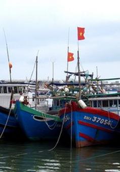 100% tàu thuyền ở Nghệ An tránh trú an toàn