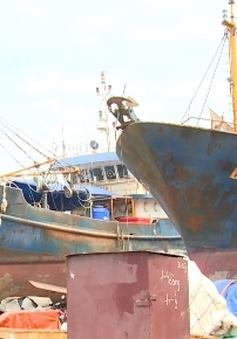 Phó Thủ tướng yêu cầu xử lý nghiêm các cơ sở đóng tàu sai phạm