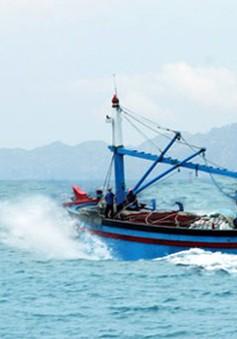 Cảnh báo tình trạng ngư dân bị dụ dỗ đánh bắt hải sản ở nước ngoài