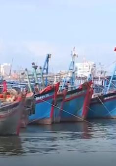 """Bình Định: Hoàn thành sửa chữa """"tàu cá 67"""" hư hỏng trước 15/1"""