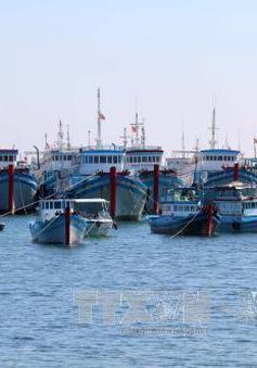Kiên Giang xây dựng khu neo đậu tránh trú bão cho 1.000 tàu