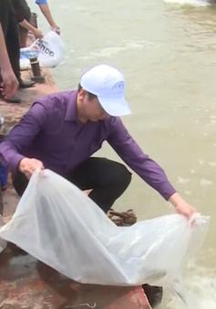 Hà Nội thả gần 1 tấn cá giống tái tạo nguồn lợi thủy sản sông Hồng