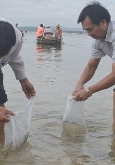 Bộ NN&PTNT làm việc với một số cơ sở thủy sản tại Phú Yên
