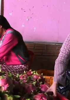Nông dân Bình Thuận trúng lớn vụ thanh long sau Tết