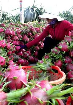 Hơn 100 tấn nông sản Việt đã xuất khẩu sang Thái Lan