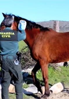 Châu Âu triệt phá đường dây tiêu thụ thịt ngựa bẩn