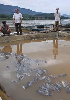 Những giải pháp hỗ trợ người dân bị thiệt hại khi thủy điện Hòa Bình xả lũ