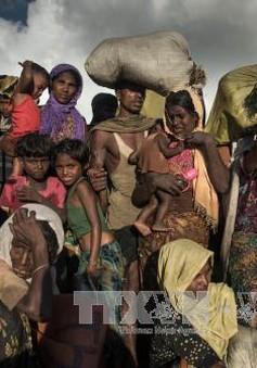 Bangladesh cho phép 10.000 người tị nạn Rohingya nhập cảnh