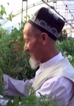 Trang trại cây nhập ngoại ở Uzbekistan