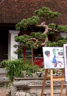 Khai mạc triển lãm ảnh Hà Nội trong tôi