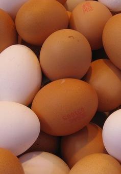 Giá trứng tại Ai Cập tăng cao vào dịp lễ Phục sinh