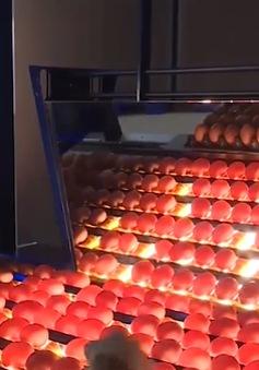 Cận cảnh quy trình xử lý giúp trứng sạch và an toàn