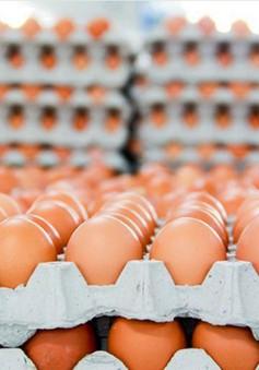 Hàn Quốc ban lệnh thanh tra toàn bộ ngành thực phẩm