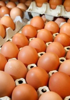 Châu Âu giận dữ vì vụ bê bối trứng gà nhiễm hóa chất