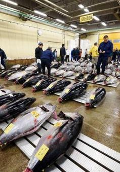 Cá ngừ tăng giá, ngành sushi Nhật Bản lao đao
