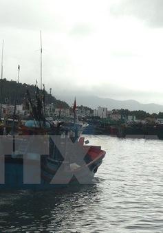 Bạc Liêu: Khẩn trương tìm kiếm ngư dân bị mất tích trên biển