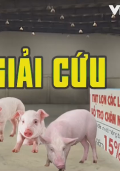 """Hết dưa, đến lợn: Làm gì để không còn phải """"giải cứu"""" nông dân?"""