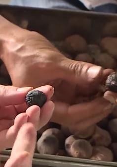 Thực hư chất lượng tỏi đen được sản xuất thủ công quy mô nhỏ