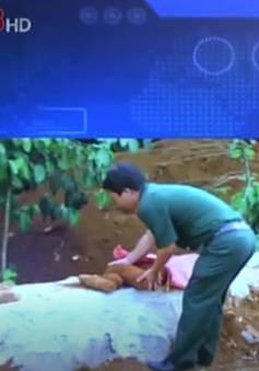 Lâm Đồng: Phát hiện nhiều đạn pháo lúc làm đường