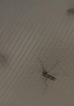 Phát hiện muỗi mang virus Zika tại New Mexico, Mỹ