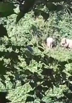 Kiểm lâm Quảng Nam khuyến cáo người dân bảo vệ đàn voi rừng