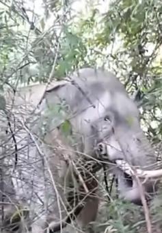 Đồng Nai thành lập đội phản ứng nhanh ứng phó voi rừng
