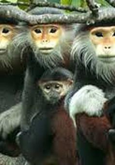 3 thành viên trong gia đình ra tòa vì săn bắt động vật quý hiếm