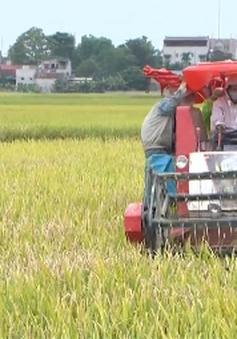 Miền Bắc được mùa vụ lúa Đông Xuân