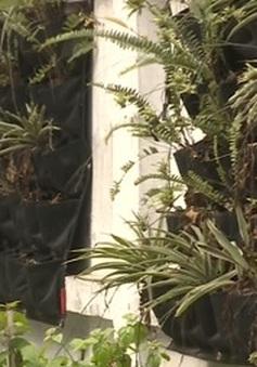 Hà Nội: Nhiều vườn hoa thanh niên bị bỏ rơi