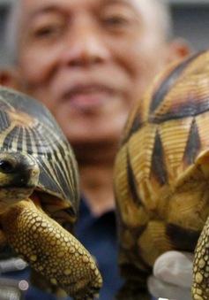 Malaysia thu giữ 330 con rùa quý hiếm