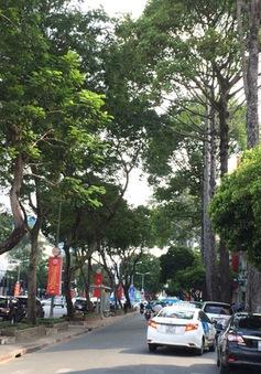 TP.HCM: Xử lý hơn 100 cây xanh quanh sân bay để giải quyết ùn tắc