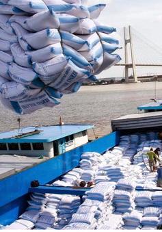 Việt Nam sẽ xuất khẩu 4 triệu tấn gạo vào năm 2030