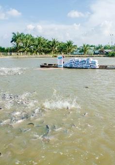 Phấn đấu đến năm 2020, xuất khẩu thủy sản đạt 8 - 9 tỷ USD